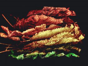 This Magnificent Leaf Art Will Leave You Bewildered